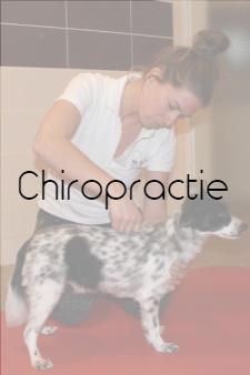 chiropractor voor dieren amsterdam